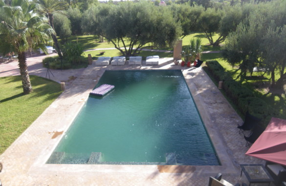 Villa avec piscine et nombreux oliviers