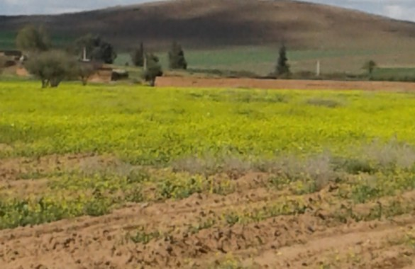 For sale 4 hectars land on the road of Fes