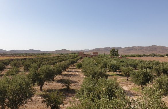 Berber style eco property on a 3.3 hectare olive grove just listed