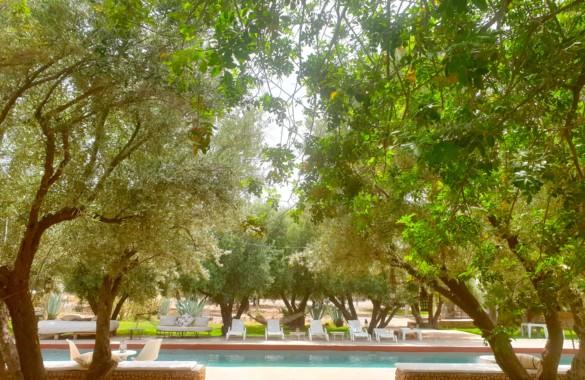 Charmant ecolodge sur 3 hectares à vendre à Marrakech