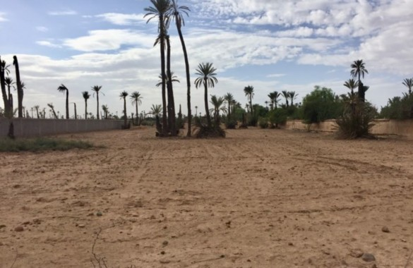 Titled plot for sale in the beautiful Palm Grove of Marrakesh