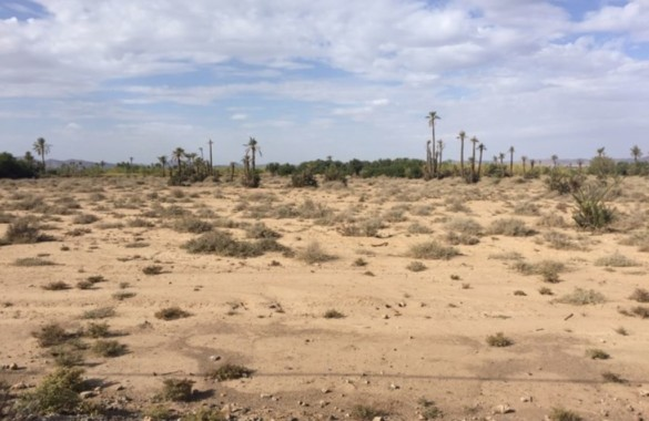 Large titled plot for sale in the palm grove of Marrakesh